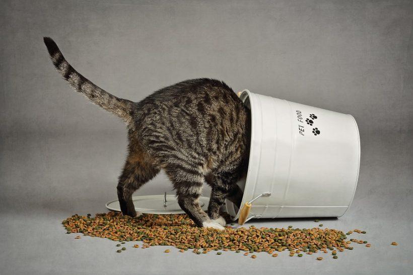 Comment choisir les croquettes pour son chat ?